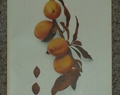 Vintage early 20th century Lithograph BLOOD LEAF PEACHES book illustration