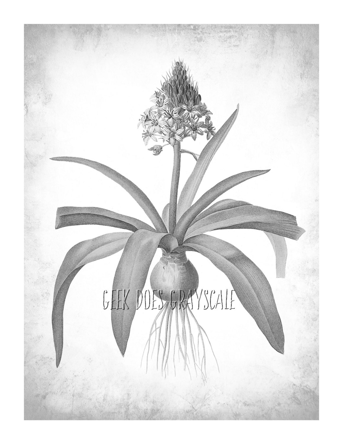 Grayscale Flower With Bulb