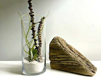Large air plant terrarium - glass vase light bulb style Living decor DIY kit - gift for any occasion- zen decor-coral- moss
