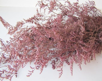 Preserved Dried Caspia Dyed Pink-  Preserved Misty - Preserved Caspia - Pink Flowers - FIller Flowers - DIY Fowers