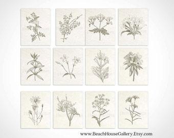 Set of 12 Botanical Prints, Vintage Botanical Illustrations, Botanical Print Set, Traditional Living Room Art, Floral Wall Art Set of Twelve