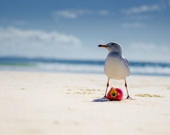 Bird Photography, Seagull, Beach photo, Sea Gull, Seagull and Red Apple, Nature photo, Beach Photography, Coastal Photography, Ocean Picture