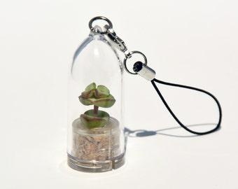 Tulip - Live Succulent Terrarium Flower- Succulent Miniature Living Terrarium plants - Inside Tiny Transparent Capsule - Boo-Boo Plant