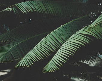 botanical photography, tropical wall art, minimal art, nature photography, botanical art, large art, palm fronds, moody, tropical decor,