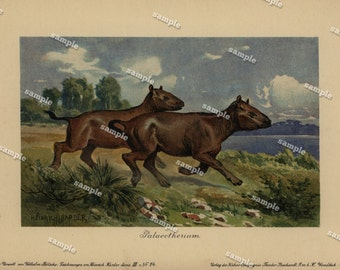 Antique Natural History Colored Lithograph of Palaeotherium  from a french/german dictionary 1890's