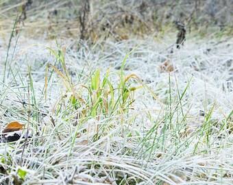 Photo instant,Download Digital photo,Instant download picture,Green,Desktop photo,Downloadable,Grass photo,Frozen grass,Close up,Printable