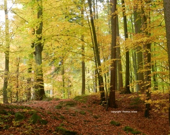 Photography, Autumn mood in the forest, high gloss, premium paper, signed