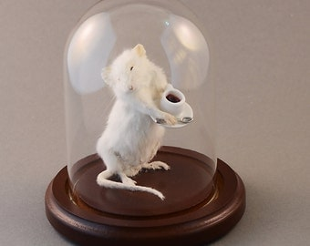 Taxidermy Coffee Shop Mouse