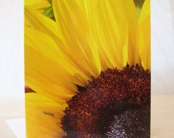 "Sunflower greeting card 5"" x 7"" (12.7 cm x 17.8 cm) close up photography"