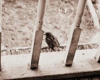 Waiting Bird Photo Print- Wall Art