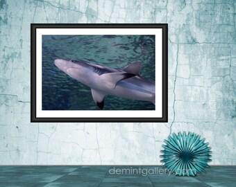Photography Art Print, Mounted Photography, Shark Photography, Ocean Photography Decor, Shark Print, KV145