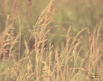 Rural Photography, Brown Grass, Country, Landscape, Nature Photography, Dry Grass, Roadside