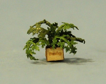 1/4 inch scale miniature-Parsley