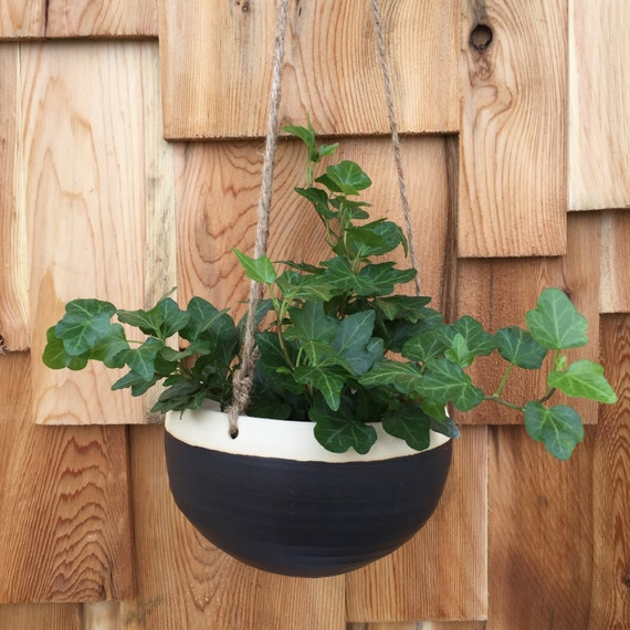 Medium Hanging Planter Matte Black Modern Minimalist Cactus