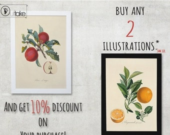 Summer sale 15% OFF When You buy two illustrations, then this will be handy. Or 10 Percent discount on Your purchase. - FREE SHIPPING Worldw