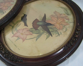 Antique Wall Art Oval Carved Frame Birds Pastel Aviary Wall Hanging Shabby Chic Home Decor Audubon Style Print