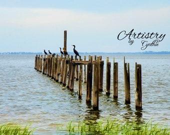 Beach Photography, Birds, St. Marks Lighthouse, Landscape, Ocean photography, Coastal Wall Art, Nautical, Seashore, Seascape