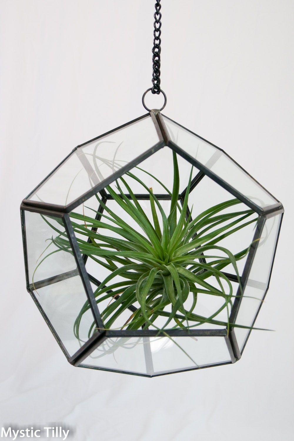Free gift geometric orb air plant holder with large air for Geometric air plant holder