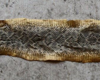 Tanned Western Diamond Back Rattlesnake Skin, Rattles