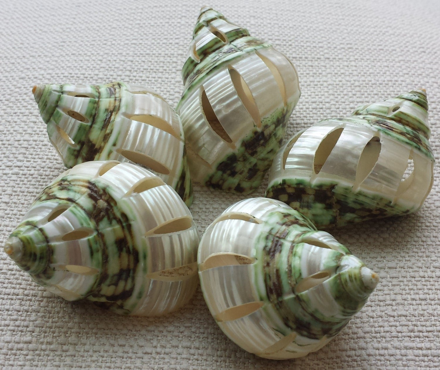 Beach decor seashells shells home decor craft shells for Shells decorations home
