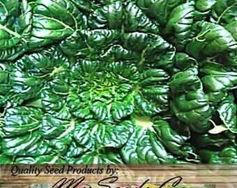 500 x Tat Soi Tatsoi Tah Tsai Spinach Seed - Mustard Seeds - Spoon Mustard Chinese Vegetable BULK - 45 - 50 Days