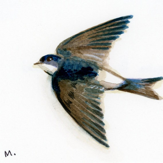 "Common House Martin - Watercolor - 4"" x 4 1/2"""