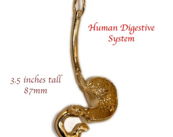 Human Gastrointestinal Tract Pendant * Digestive System * Stomach * Esophagus * Duodenum * Anatomy Jewelry