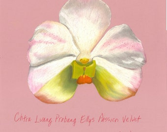 Print of an original pastel drawing of a Chtra orchid
