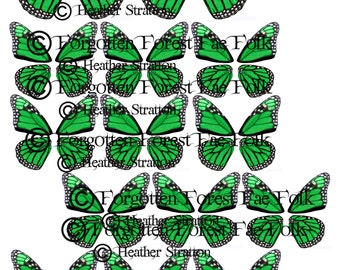 Green monarch butterfly wings