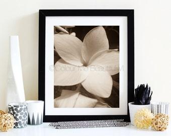 Sepia Flower | 8x10 | Digital Art