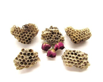 5 Small Natural Wood Pulp And Paper Wasp Nest #020