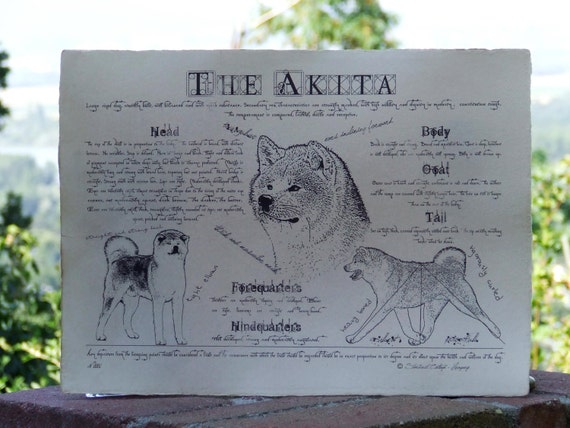 Antique styled dog standard - Akita