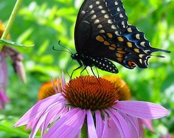 Art, Photography, Butterfly, Flower, Garden, Macro