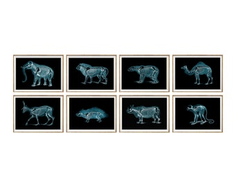 Xray Art Print SET of 8. gifts for vets, veterinary art, veterinarian office decor, animal anatomy prints, xray print set, animal xray, wall