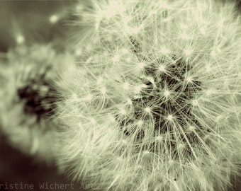 "Poof // 7x5"" Photo Print // Art Photography // Black and White Photo // Nature Photo // Macro Art // Dandelion // Abstract // Home Decor"