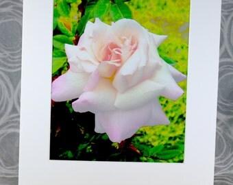 Rose, photograph, pink, 8 x 10, 11 x 14 mat