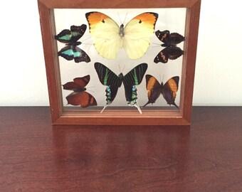 Vintage Handmade in Peru Framed Butterflies // Butterfly Taxidermy // Showbox