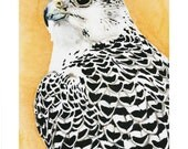 Gyrfalcon - Acrylic Painting Art Print 11x14