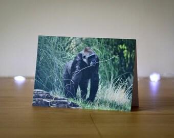 Photo Note Card, Western Lowland Gorilla, Wildlife Photography, Animal Print, Blank Greetings Card
