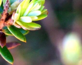 Light On Green - Macro Photography - Floral Photos - Digital
