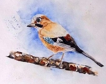 Watercolor watercolor painting original Jay bird animal