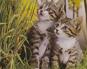 Vintage Book Image (1975): Tabby Kittens