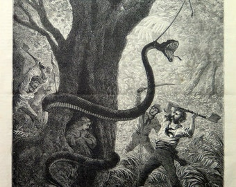 1873 Amazing colossal antique combat Snake man engraving, curious snake reptil print, curiosity oddity jungle selva fighting illustration.