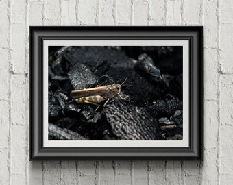 Insect Photography, Decor art, Color photography, Nature art, Modern art