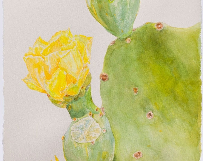 Edwina Nelson, Spineless Prickly Pear, 2015