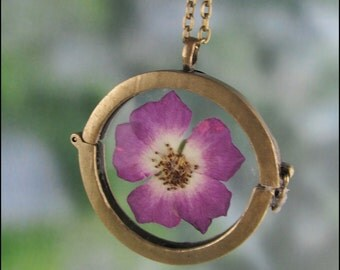Real wild rose flower in a glass Locket