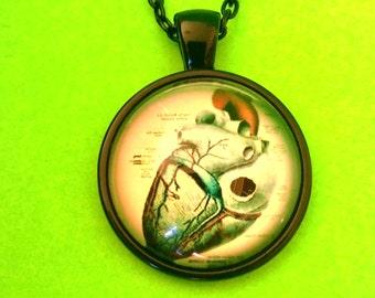 Anatomical Heart Vintage Anatomy Book Illustration Glass Pendant Necklace
