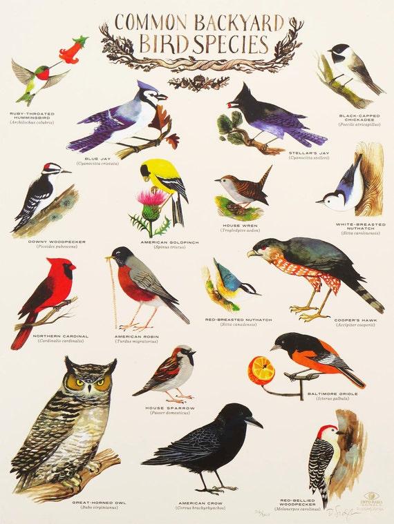 Common Backyard Birds: 18 x 24 inch Limited Edition