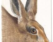 Hare, ACEO original drawing,British wildlife art