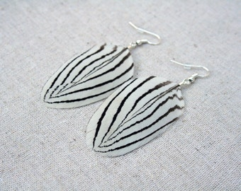 Silver pheasant white and black stripy feather earrings